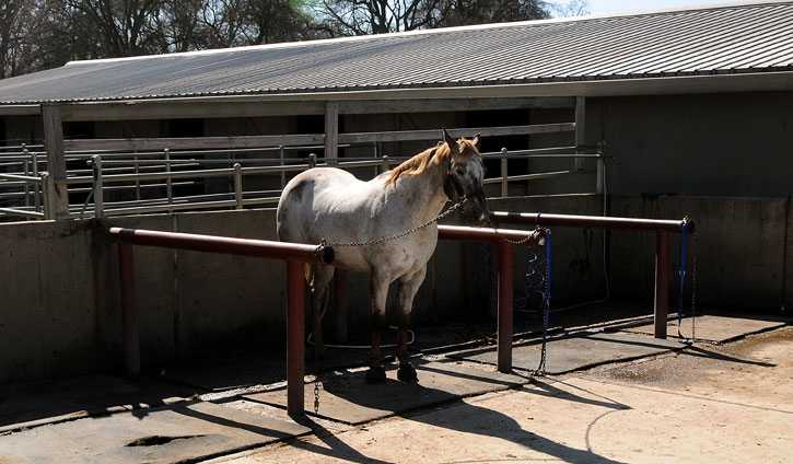 boarding a horse pasture vs stable essay How to start a christmas tree farm  to provide a stable yearly income, most growers plant or re-plant one-eighth of their acreage every year,.